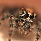Mr Spider put his happy face on upside down by Graeme Mockler