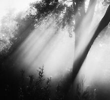 """""""Light Shafts"""" by debsphotos"""