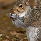 Gray Squirrel Portrait by Michael Mill