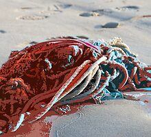 Seashore Carnage by Troy Dodds