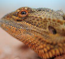 dragon eye by Les Pink