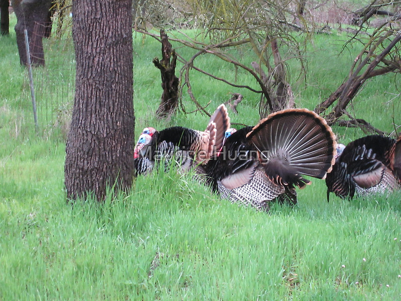 Turkey Convention by Maurine Huang