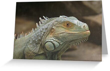 Iguana Portrait by Karen K Smith