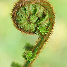 Scottish fern Koru by Nik Jowsey