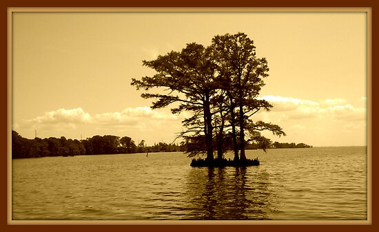 Cypress Tree in the Bay by WeeZie
