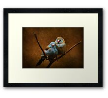 Male and Female Cordon Bleus Framed Print