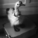 Gemima Is Completely Quackers by rorycobbe