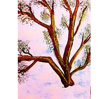Abstract Tree Branches, watercolor Photographic Print
