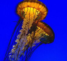 Jellyfish Shining in the Sea by photoprol