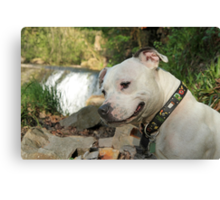 Millie at the Waterfalls Canvas Print