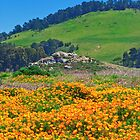 California poppies- Pt. Lobos by David Chesluk