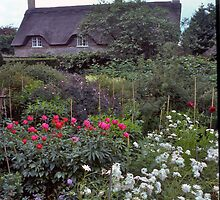 Cottage garden#3, Stratford-upon-Avon, UK by johnrf
