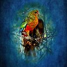 """""""Western Rosella"""" by Heather Thorning"""