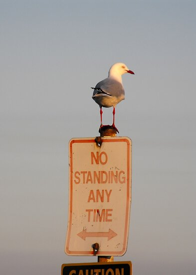 No Standing! by Kayleigh Walmsley