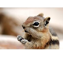 Golden Mantled Ground Squirrel (3) Photographic Print