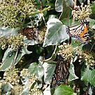 Monarchs by Gregory John O'Flaherty