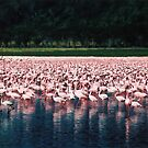 Pink Flamingoes / Lake Nakuru by Dean Cunningham