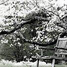 Springtime Relaxation by Karen Kaleta