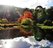 Autumn's Mirror Image  by LisaErin