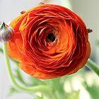 In Love with Orange by BarkingGecko