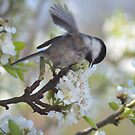 Pear Blossom Frolic by Jay Morgan