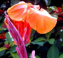 Canna lily with spike in soft focus by ♥⊱ B. Randi Bailey