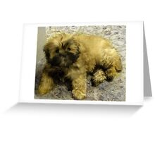 maltese shih tzu pup Greeting Card