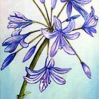 Agapanthus Surprise - Flowers by  Linda Callaghan