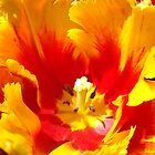 Yellow Red Tulip Flower art prints Floral Baslee Troutman by BasleeArtPrints