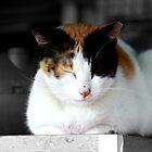 Cat Nap by teenspirit