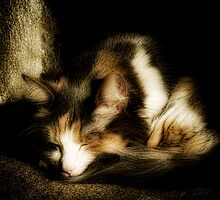 Lilly Sleeping by Theodore Black