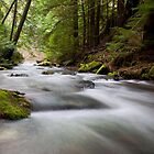 Beauty Bay creek by Steve Biederman