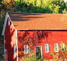 The Red Shed - Vines and Shadows by Kam Johnson