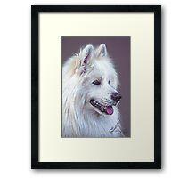 Samoyed dog Framed Print