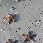 Starfish on Beach by mklue