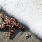 Starfish in Waves by mklue