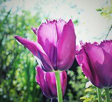 Purple Spring by Shootin