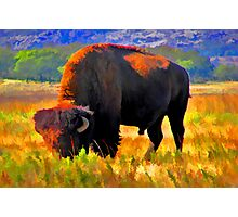 Plains Bison Photographic Print