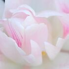 ♥Dream of Pink♥ by Rosy Kueng
