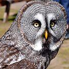 Grey Owl by Jim Wilson