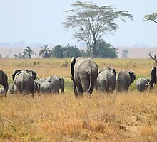 """Goodbye"" African Elephants, Serengeti, Tanzania.  by Carole-Anne"