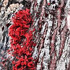 Red Moss - Lakewood, Wa by Arelle Hall