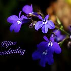 Sweet Lobelia - Moederdag by steppeland-2