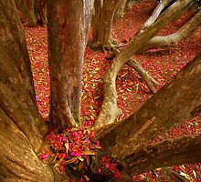 Rhodedendrum leaf drop! by pollygirl