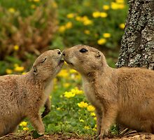 First Kiss by Mark Hughes
