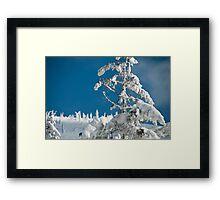 Frozen trees Framed Print