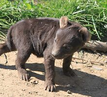 Hyena cub 2 by DutchLumix
