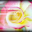 A rose is a rose... by Hazel Dean