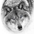 Wolf Eyes by Jim Cumming