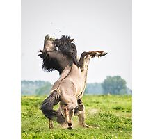Horses don't usually fight over grass Photographic Print